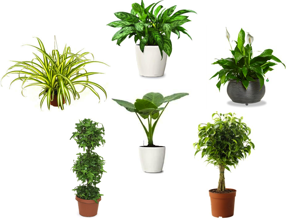 Air purifying plants indoor plants Images of indoor plants